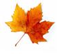 leaf-5.png