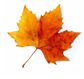 leaf-8.png